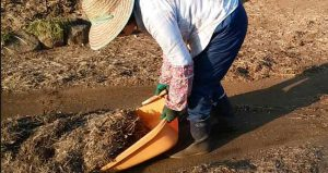 Composting with hand scoop