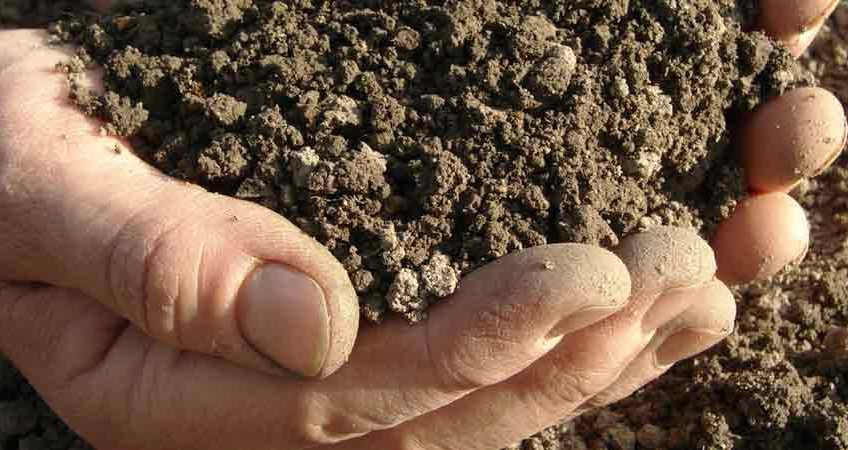 Dr. Seki's Amazing Soil