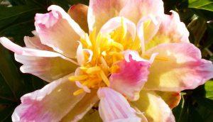 beautiful fragrant flowers